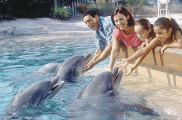 SeaWorld Discount Tickets